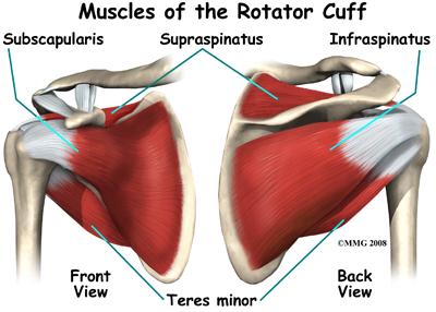 rotator cuff muscles injury