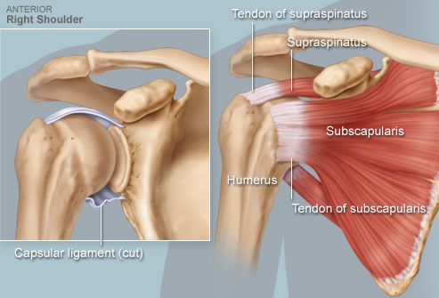 Rotator Cuff Injury Test Diagnostic Amp Treatment